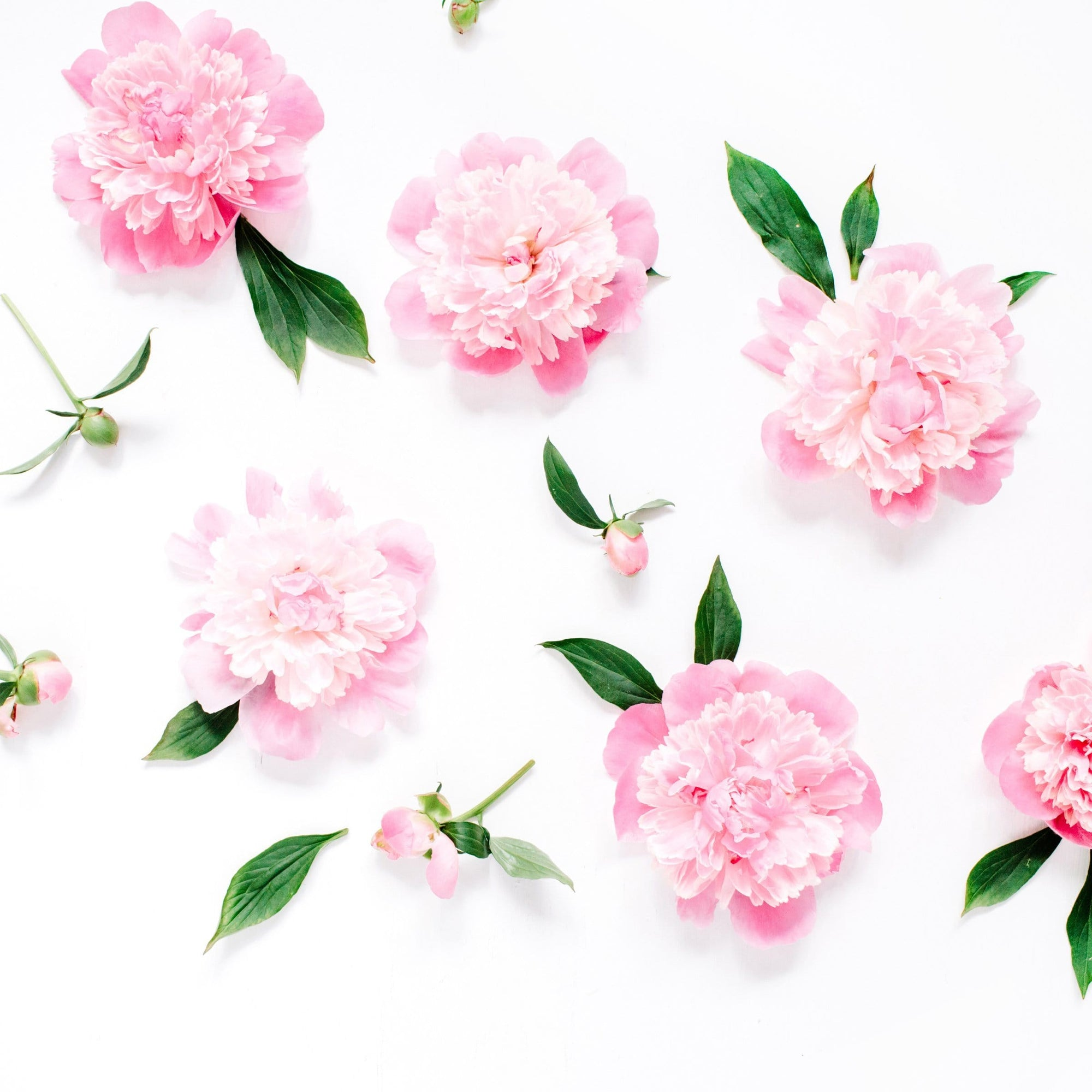 Pink Peony Diffuser Oil Refill