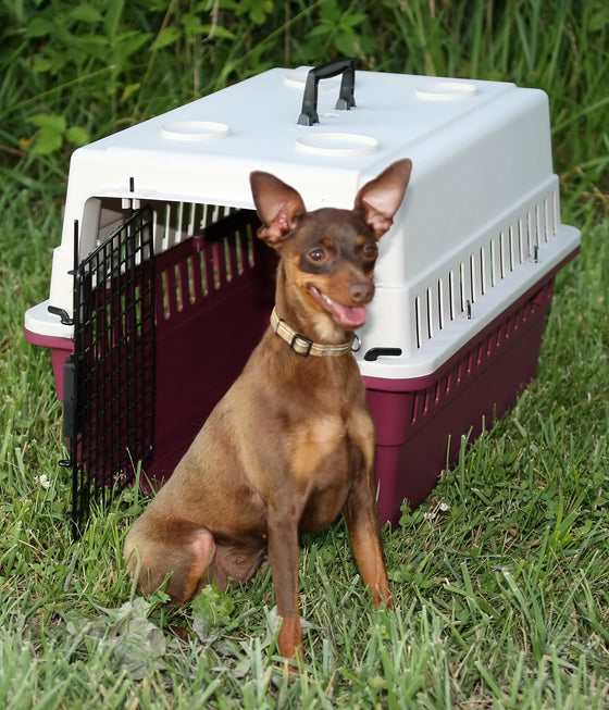 Protective Carrier/Crate - Junior