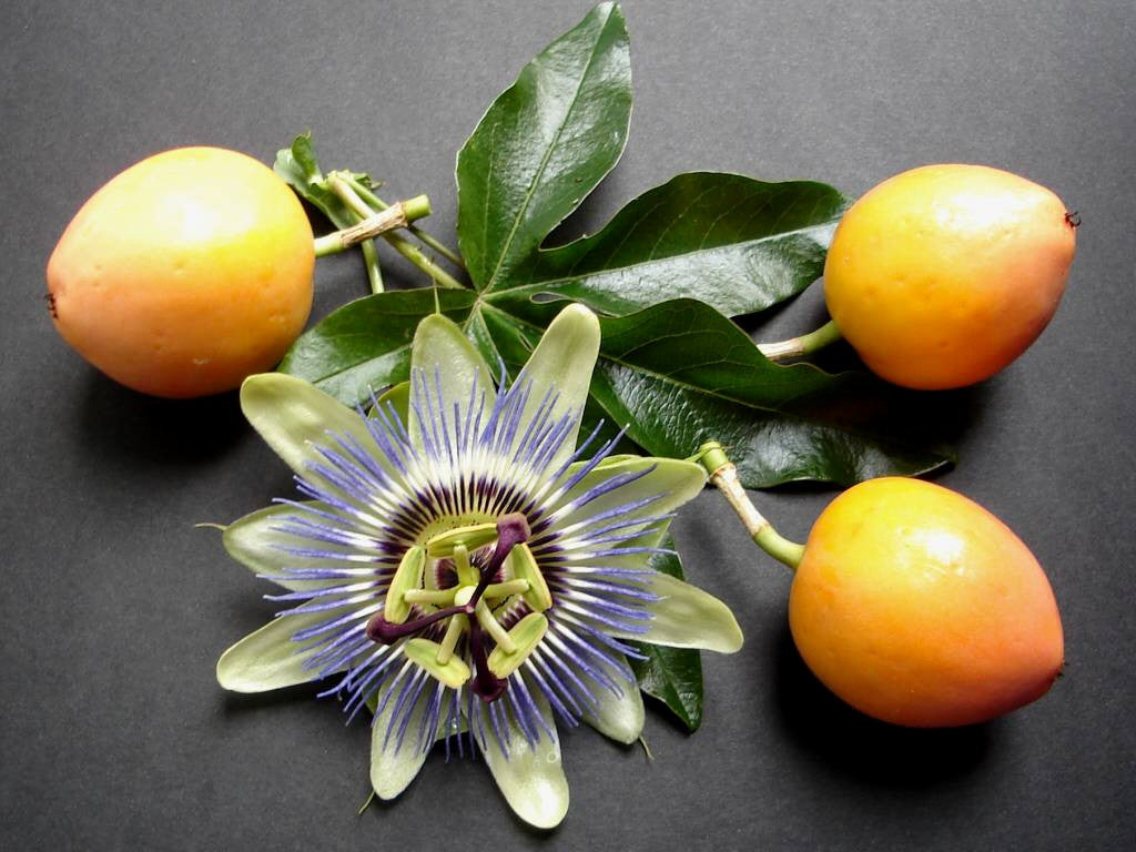 40 Purple Passion Flower Seeds- FREE SHIPPING
