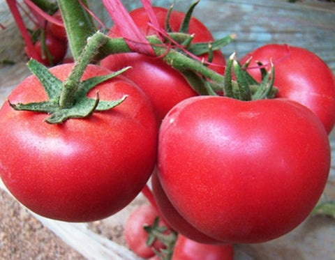500 Organic Tomato Seeds - Daily Deal