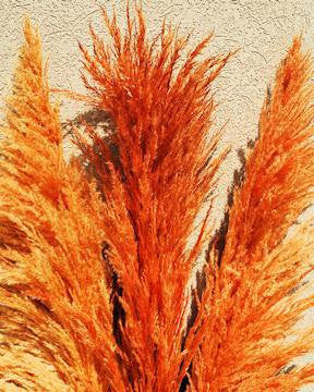 1200 Pampas Grass Seeds (Multicolor) - FREE SHIPPING