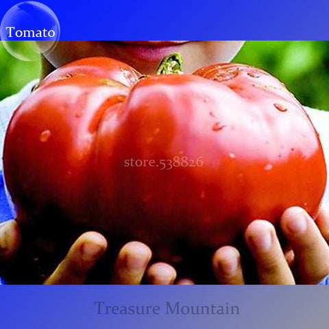 Heirloom Giant Tomato Seeds