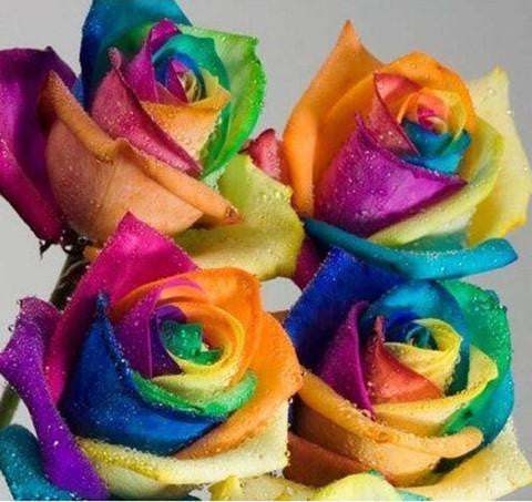 100 RARE RAINBOW ROSE FLOWER SEEDS