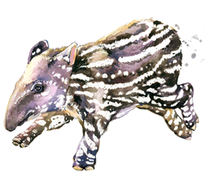 Tapir Tuesdays