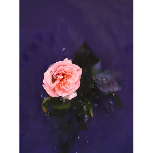 Rose And Fall - Ophelia series - Stacey Weaver