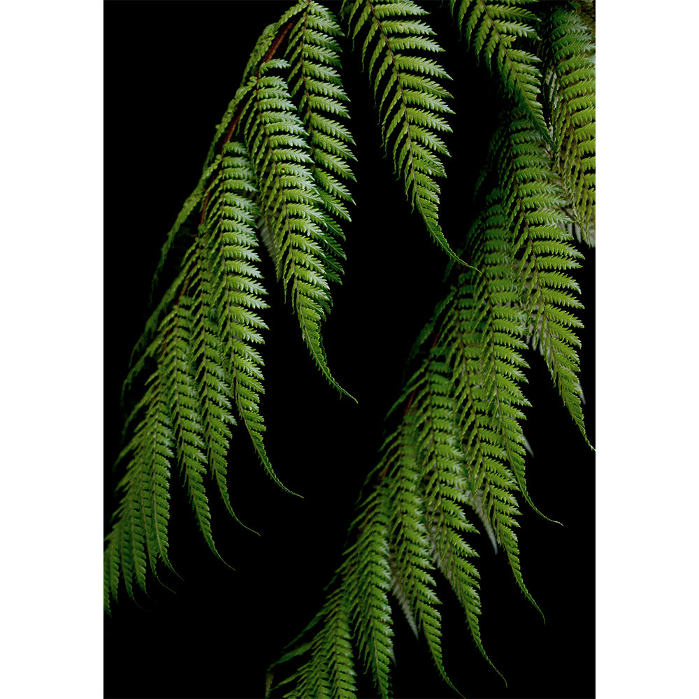 Fern on Black - New Zealand native