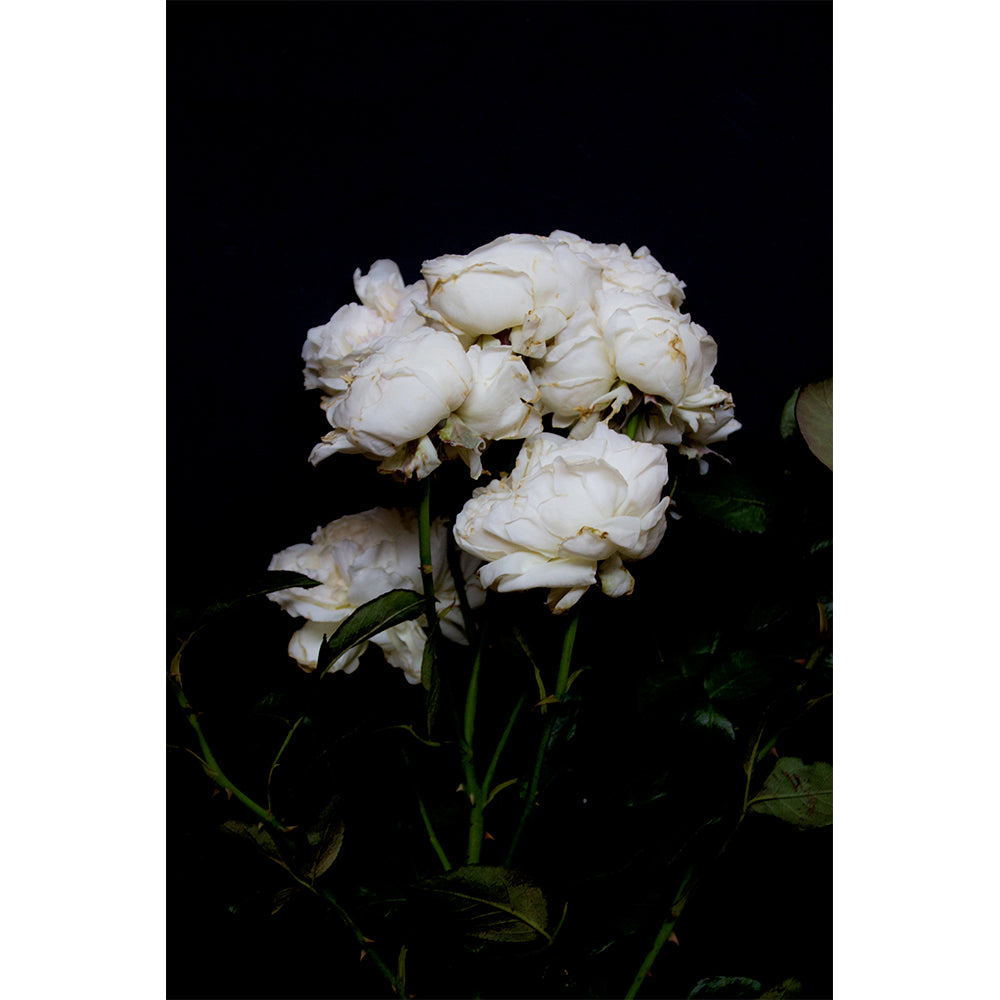 Roses - White Bouquet