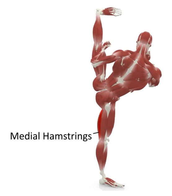elasticsteel kicking side kick paul zaichik muscles medial hamstrings