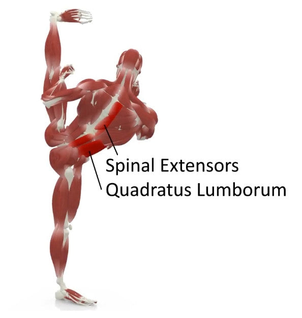 elasticsteel kicking side kick paul zaichik muscles spinal extensors quadratus lumborum