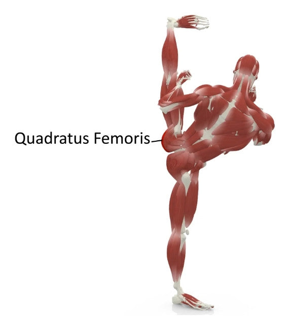 elasticsteel kicking side kick paul zaichik muscles quadratus femoris