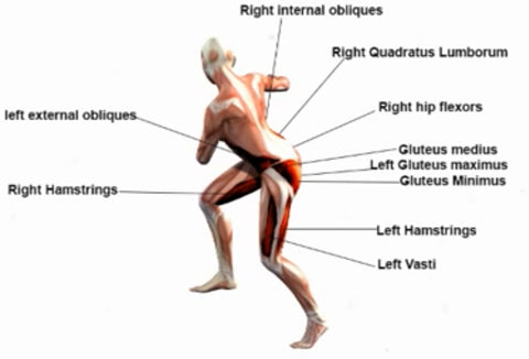 a description of an anatomical analysis of a roundhouse kick Other may bend the kicking leg because they confuse a number of similar looking martial arts techniques with the muay thai round kick the karate roundhouse kick (mawashi geri) requires that you raise your kicking leg in a bent and chambered position, then extend the lower leg in a snapping motion and kick with the ball of your foot (not the shin.
