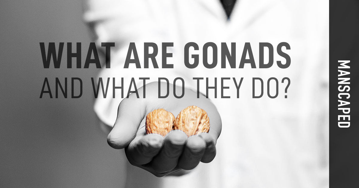 What Are Gonads and What Do They Do?
