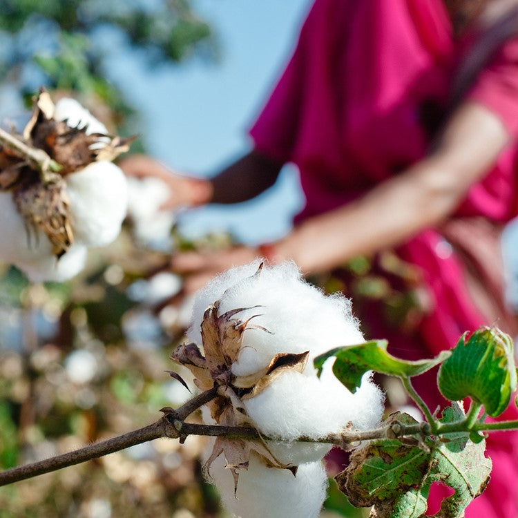 Organic cotton vs Cotton