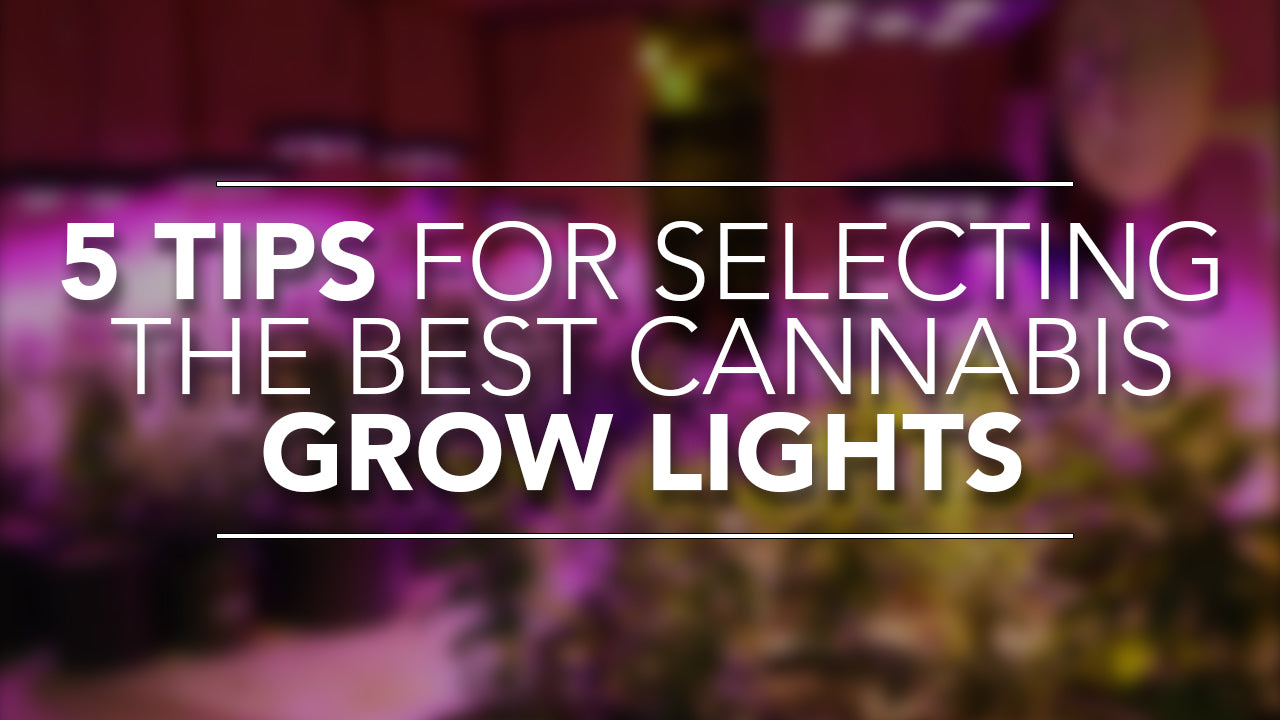 5 Tips for Selecting the Best Cannabis Grow Lights