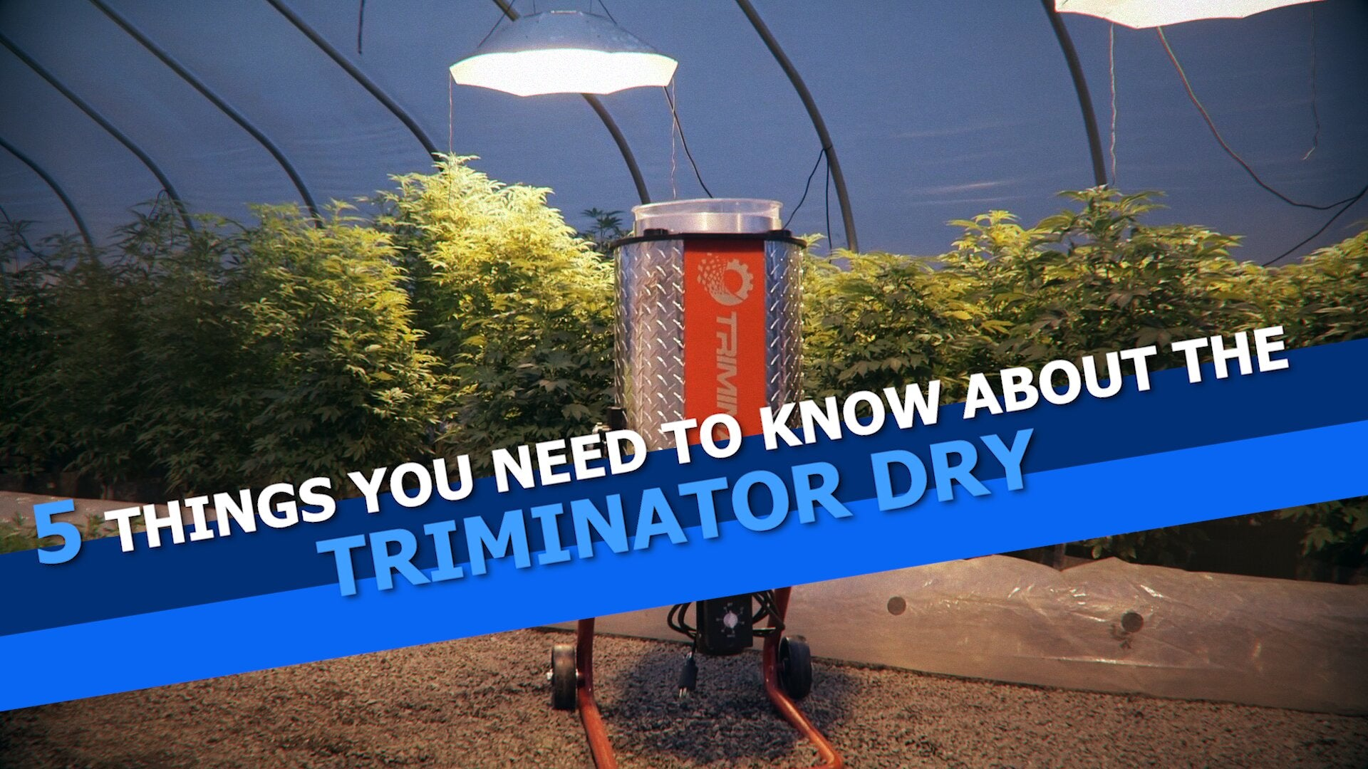 5 Things You Need To Know About The Triminator Dry Automatic Dry Bud Trimmer