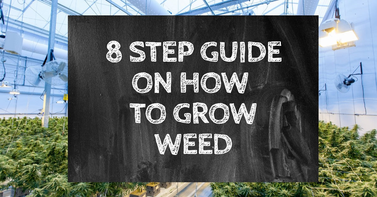 8 Step Guide On How To Grow Weed