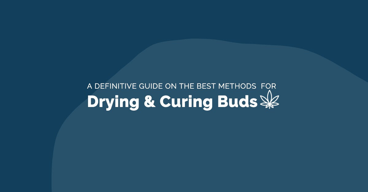 A Definitive Guide to Drying and Curing Cannabis Buds