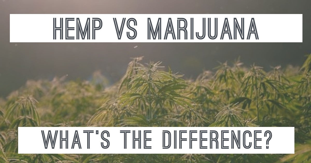 Is Hemp also Marijuana? What's the Difference?