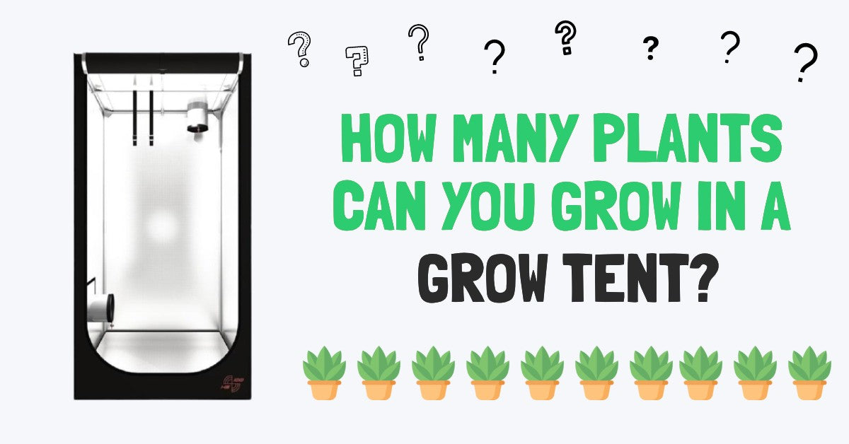 How Many Plants Can You Grow In a Grow Tent