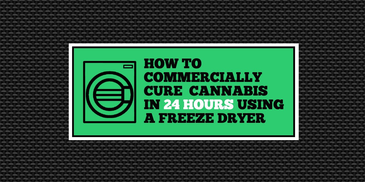 How to: Commercially Cure Cannabis in 24 Hours Using a Freeze Dryer