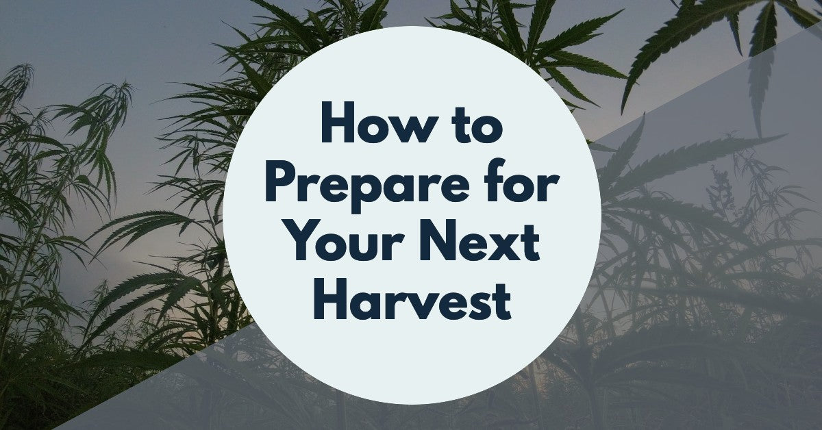 How to Prepare For Your Next Cannabis Harvest