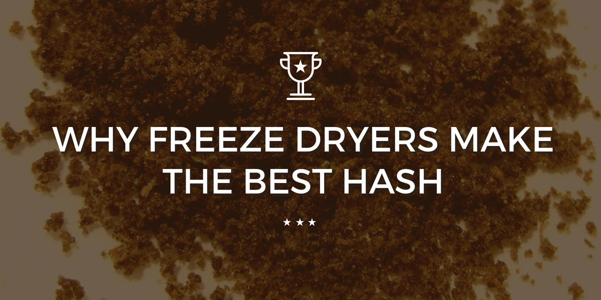 Why Freeze Dryers Make the Best Bubble Hash