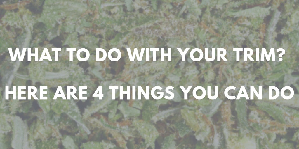 What To Do With Your Cannabis Trim: Here are 4 Things You Can Do