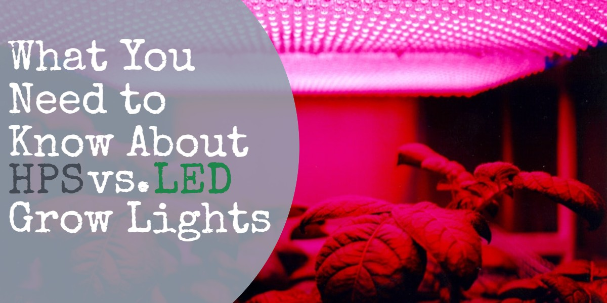 What You Need to Know About HPS vs. LED Grow Lights