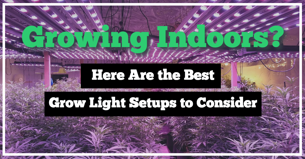 Growing Indoors? Here Are The Best Grow Light Setups to Consider