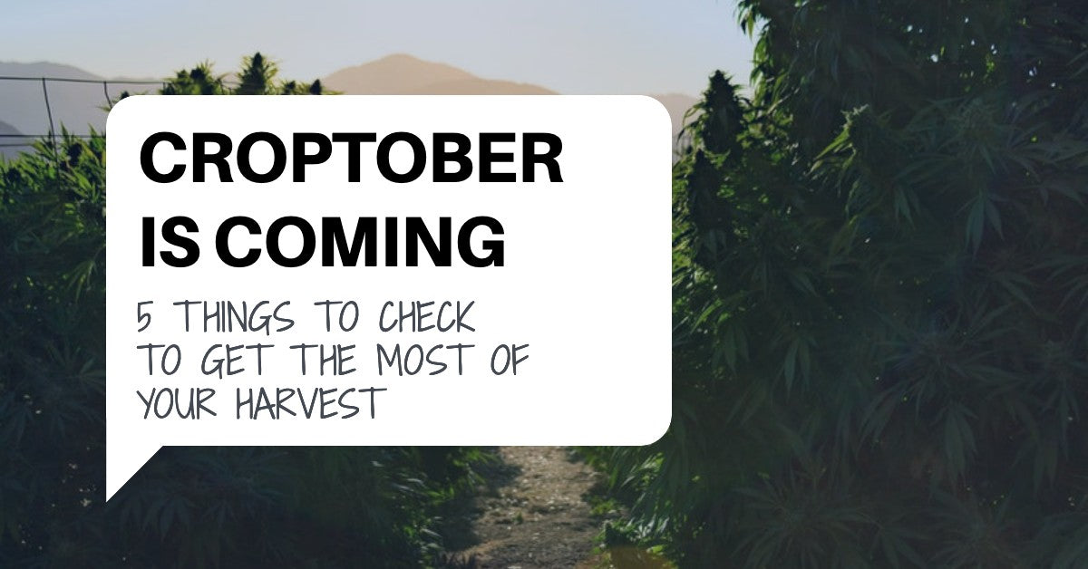 Croptober Is Coming: Five Things To Check To Get The Most Of Your Harvest.