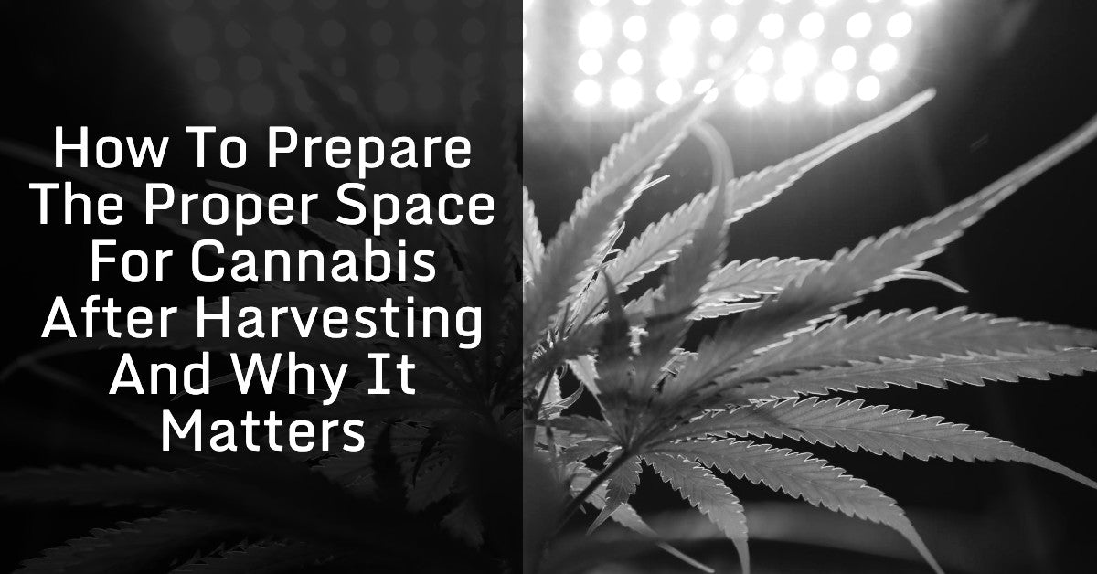 How To Prepare The Proper Space For Cannabis After Harvesting And Why It Matters
