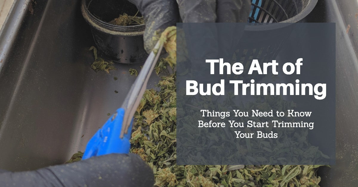 The Art of Bud Trimming: Read This Before You Start Trimming Your Buds