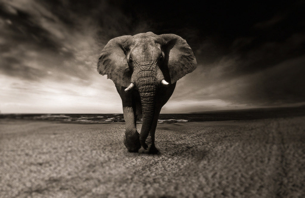 Top 19 Reasons Why Elephants Need Us