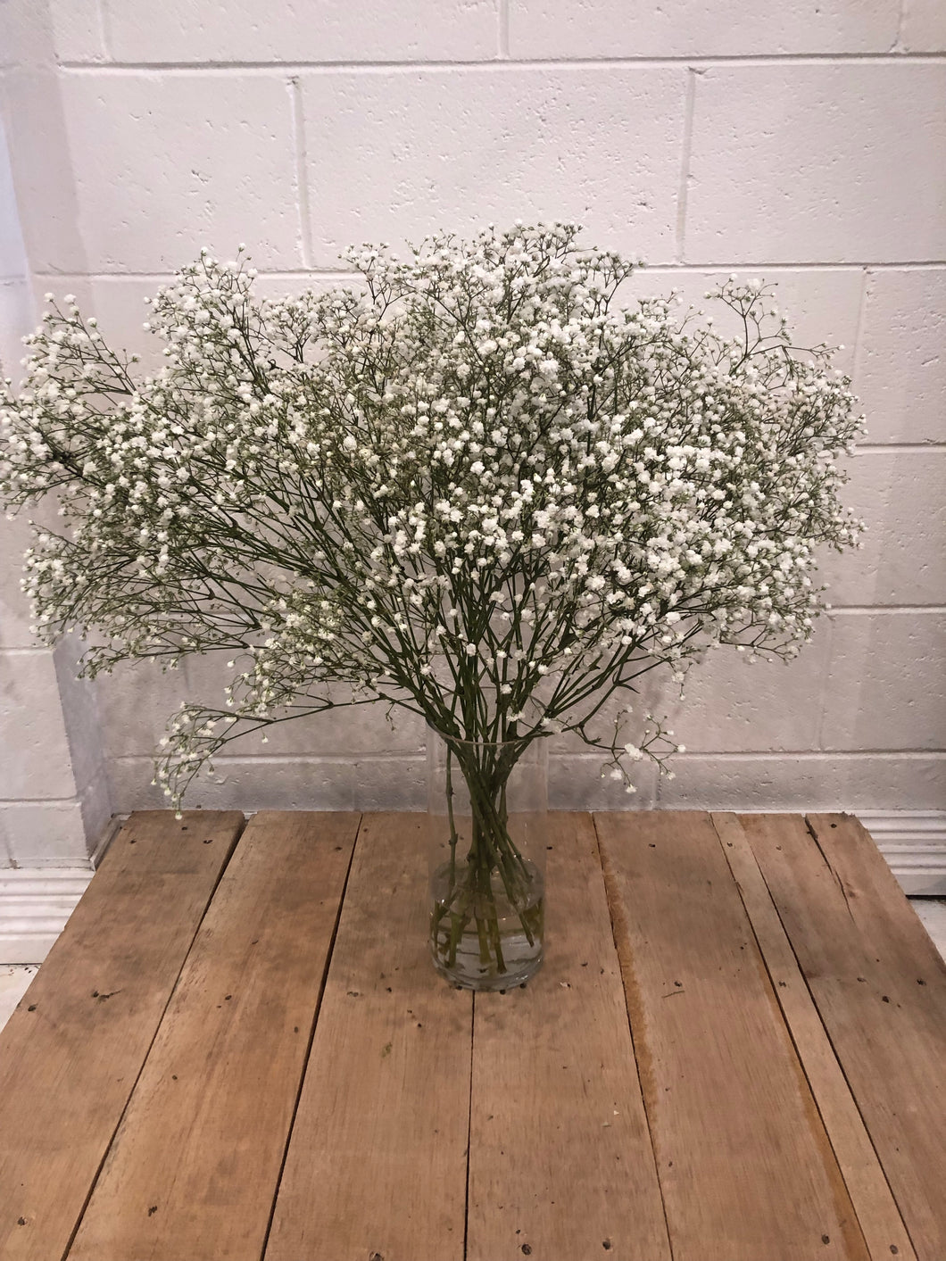 Gypsophilia (Baby's Breath)