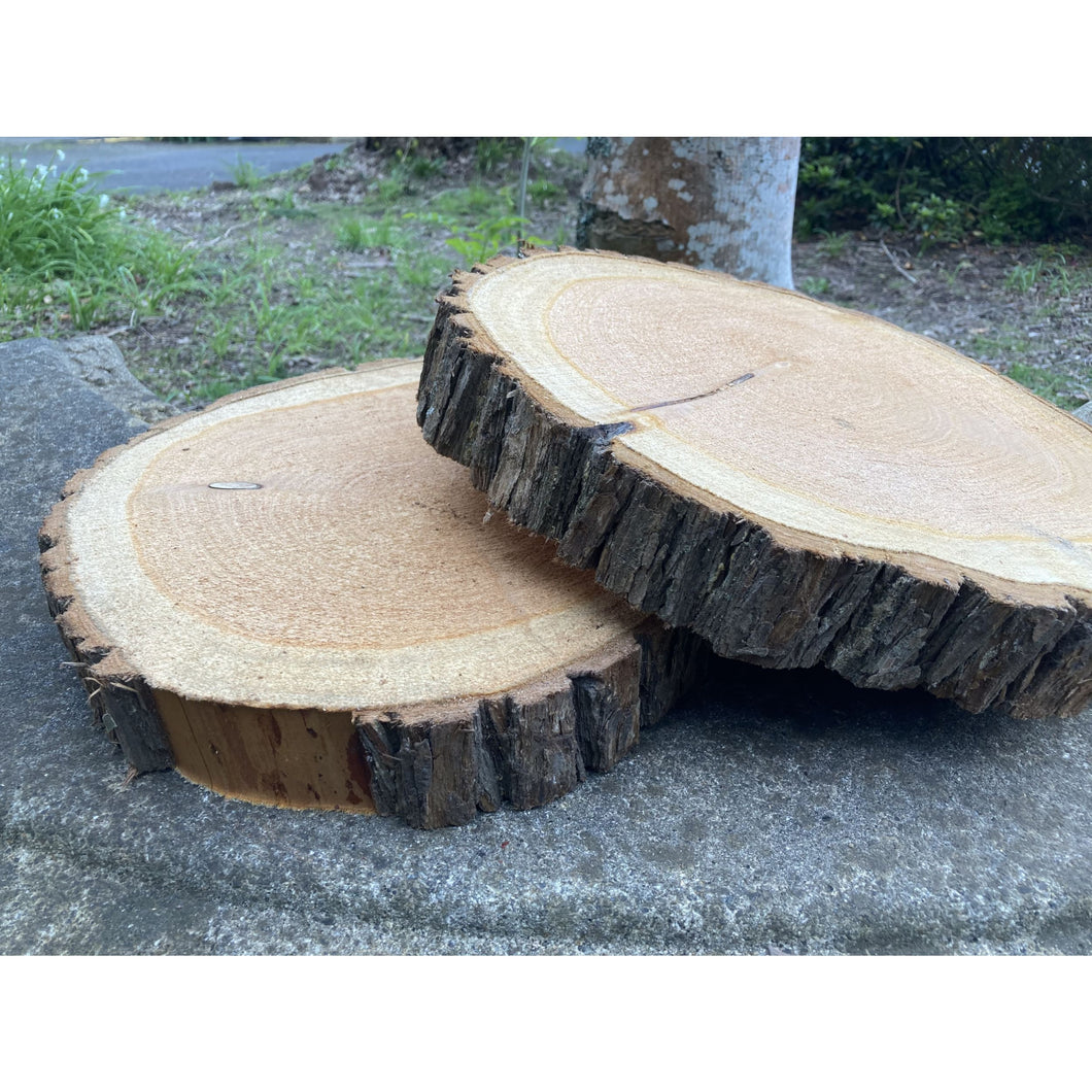 30 - 36 cm Thick Wood Slice (5 cm) - Large wood slices