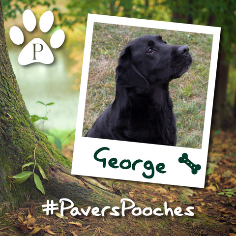 George #PaversPooches