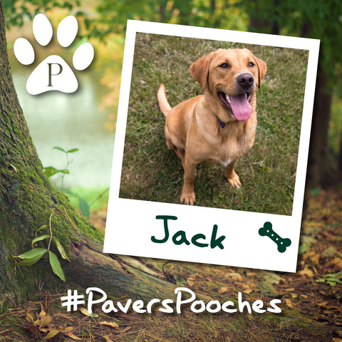 Jack #PaversPooches