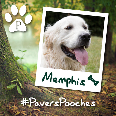 Memphis #PaversPooches