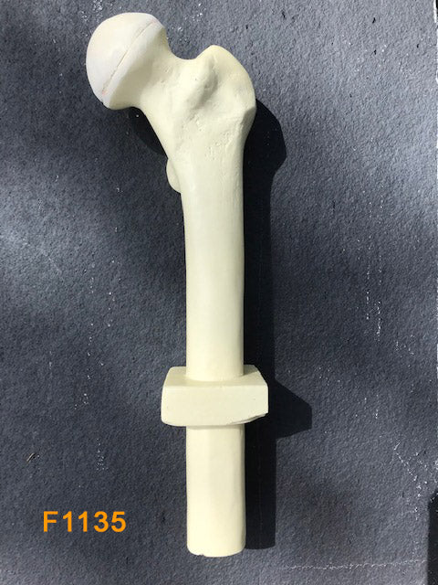 Proximal Femur Left F1135