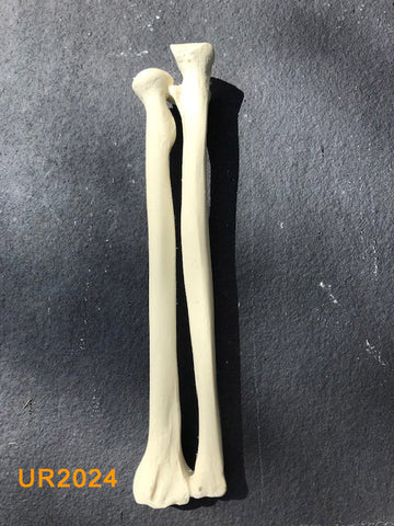 Ulna / Radius Large Left. UR2024