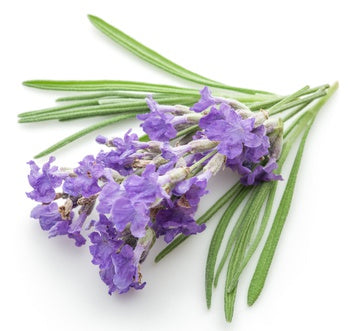 Lavender Swiss FO (Phthalate Free)