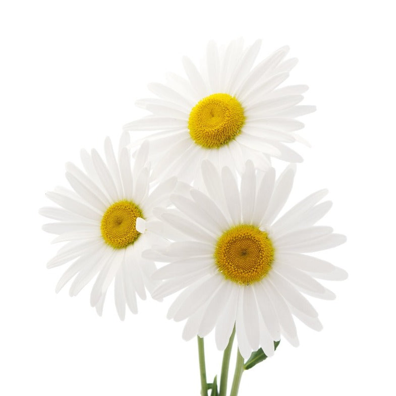 Daisy (Marc Jacobs Type) FO