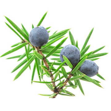 Juniper Berry (India) EO