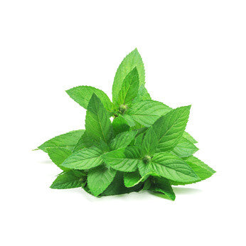 Peppermint India (Piperita)