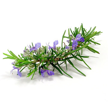Rosemary (Spanish) EO