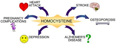 Homocysteine and health