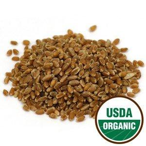 Wheat Grass Sprouting Seeds Organic - Agropyron elongatum, 1 lb