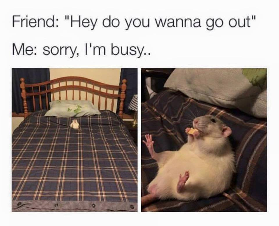 12 Hilarious Rat Memes From Around The Internet