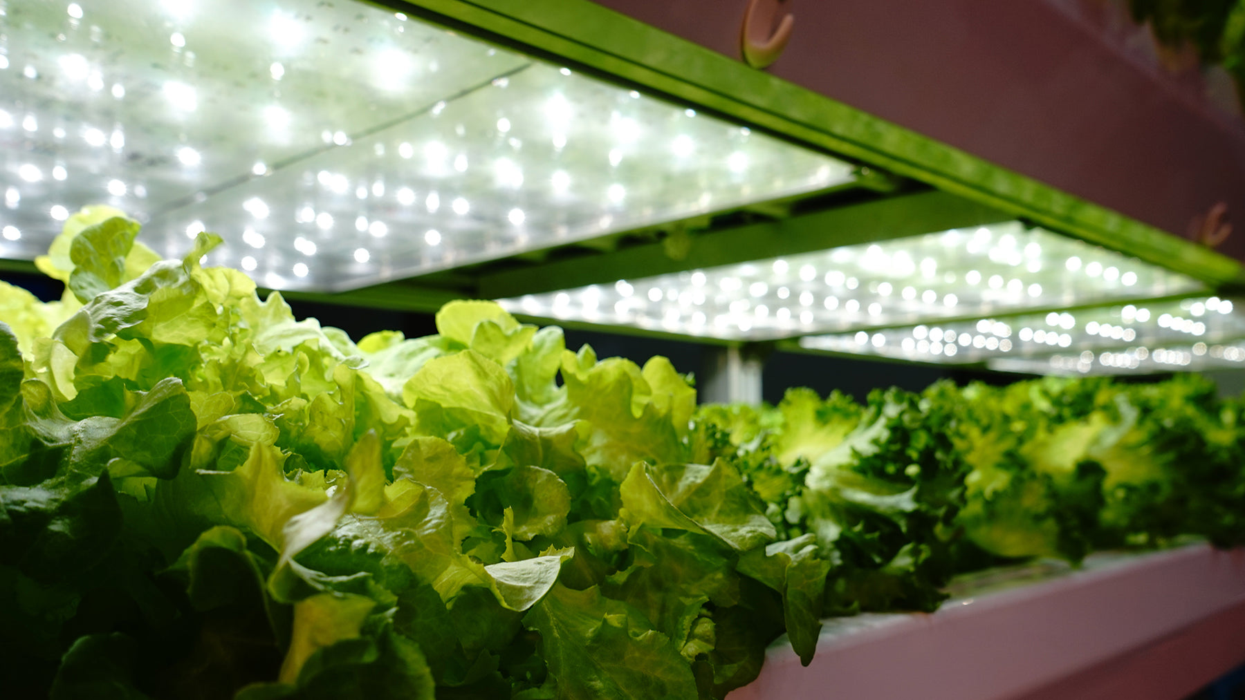 Ultimate Guide to Buying Grow Lights