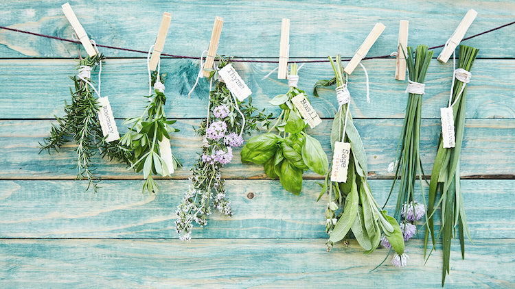 A Beginner's Guide to Growing Culinary Herbs